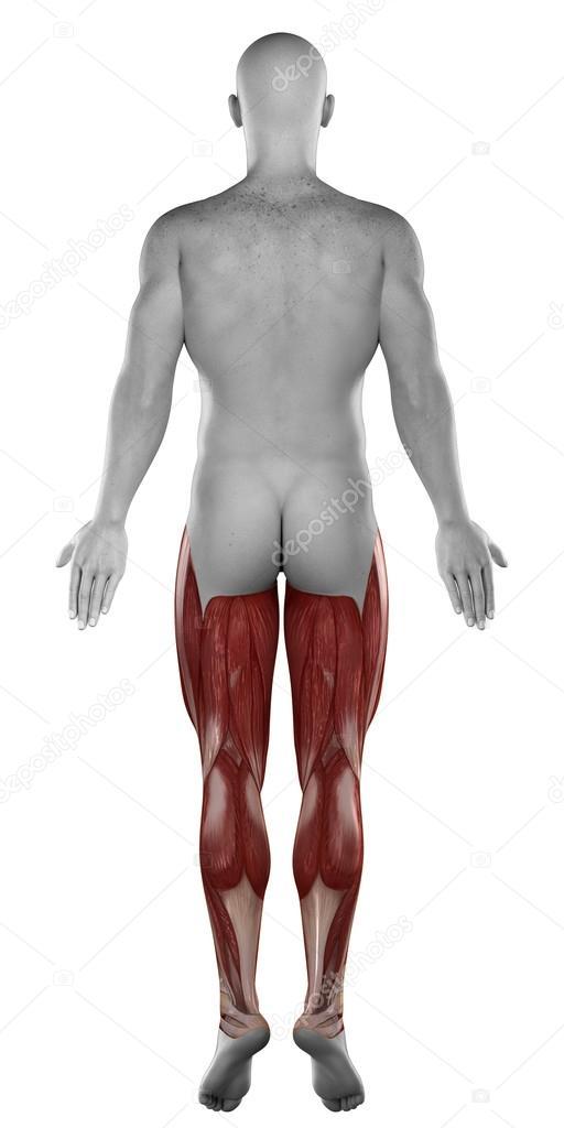 macho músculo de la pierna — Foto de stock © CLIPAREA #39844637