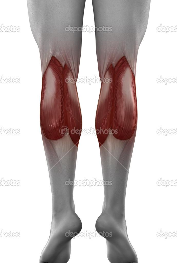 Anatomía masculina gastrocnemio — Foto de stock © CLIPAREA #39844651
