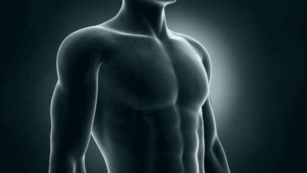 anatomie srdce lidské xray