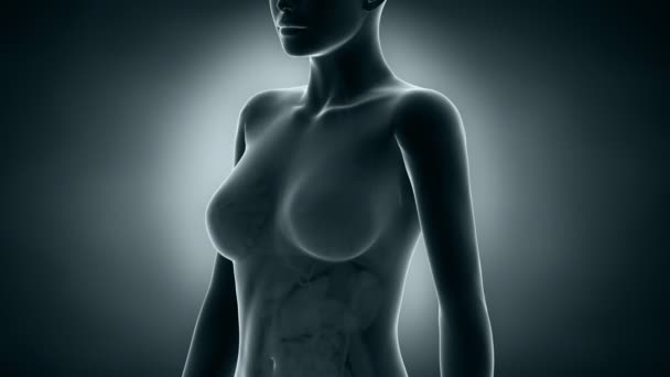Female BREAST anatomy x-ray