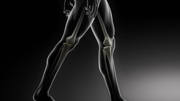 Bottom parts skeleton medical scan