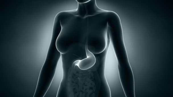 žena žaludku rentgen