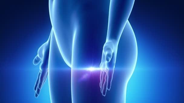 pohlavní orgány ženské skenování