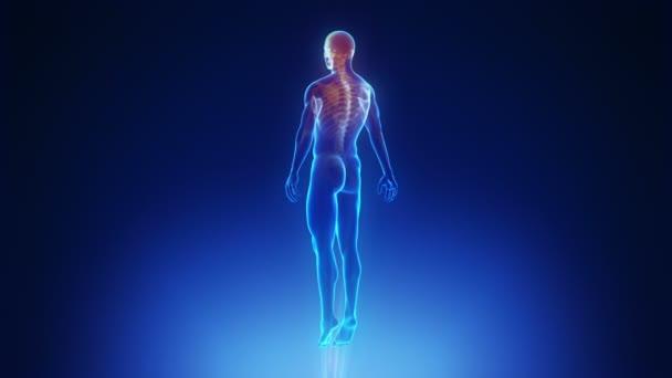 scansione del corpo maschile