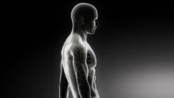 Halswirbelsäule Anatomie Mann — Stockvideo © CLIPAREA #50935791
