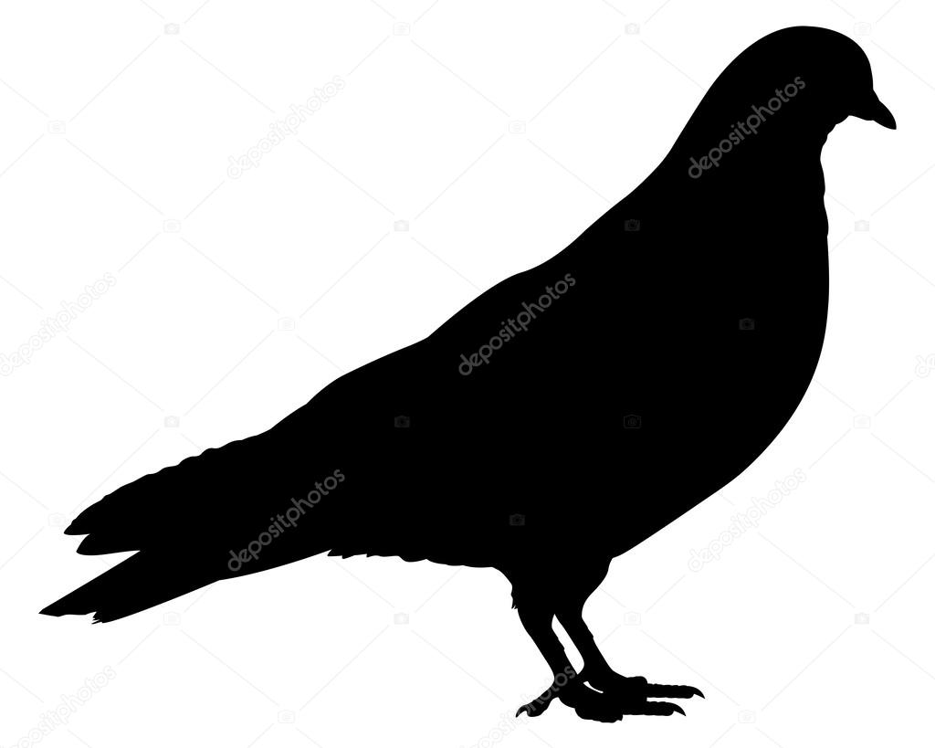 Pigeon illustration - photo#34