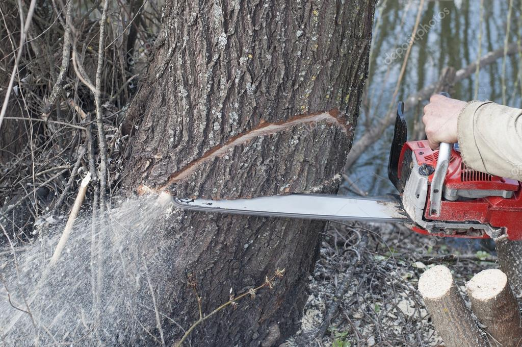 Chainsaw. Man cutting trees