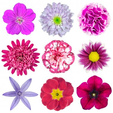 Collection of Nine Various Pink, Purple, Red Flowers Isolated