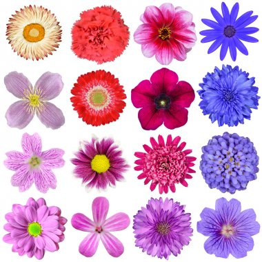 Big Selection of Colorful Flowers Isolated on White Background
