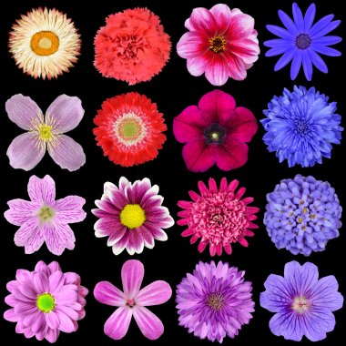 Big Selection of Colorful Flowers Isolated on Black
