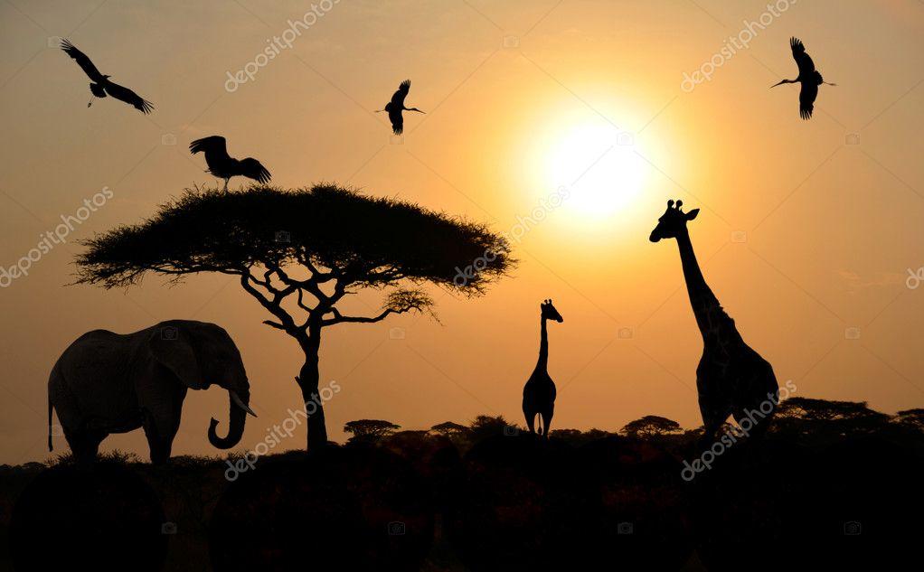 Animal silhouettes over sunset on safari in african savannah