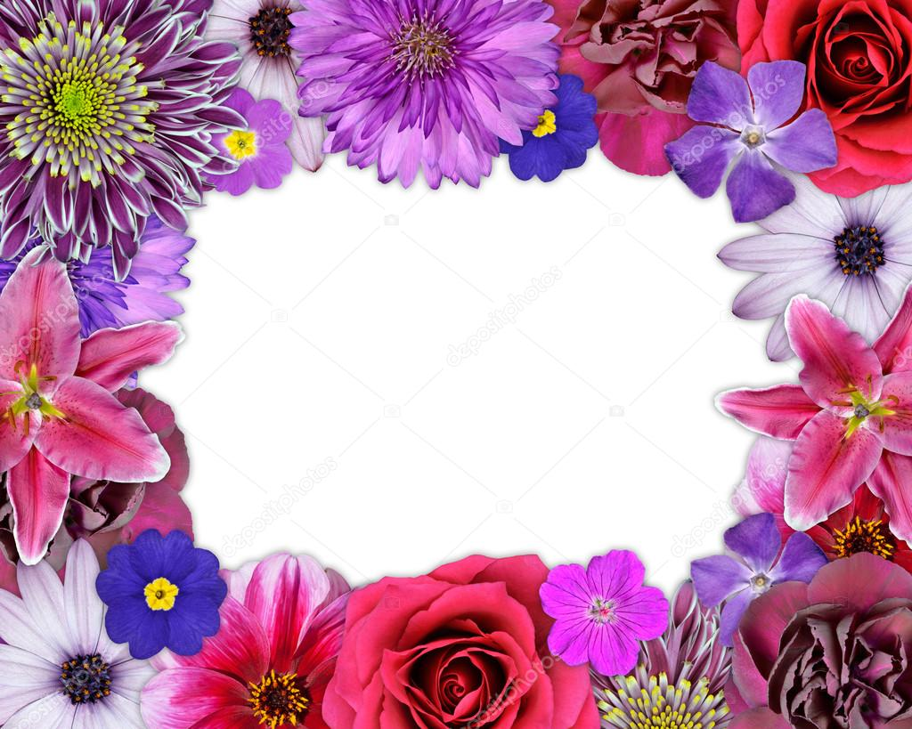 Flower Frame Pink Purple Red Flowers On White Stock Photo