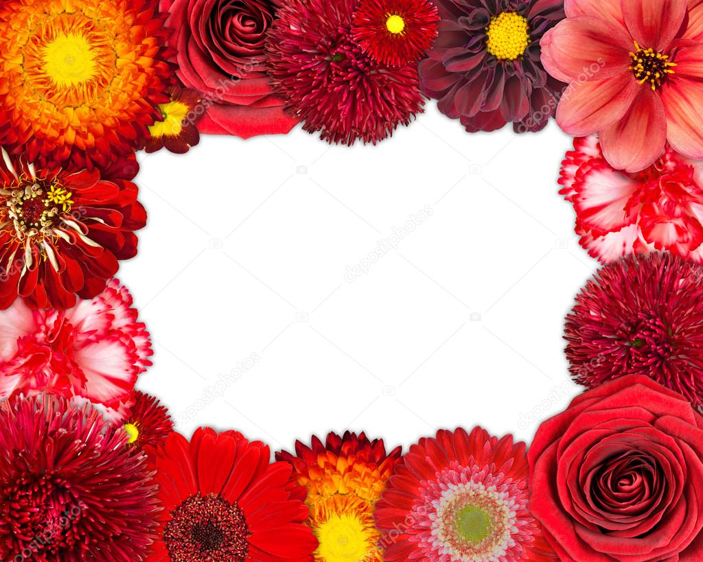 Flower Frame with Red Flowers on Blank Background — Stock Photo ...