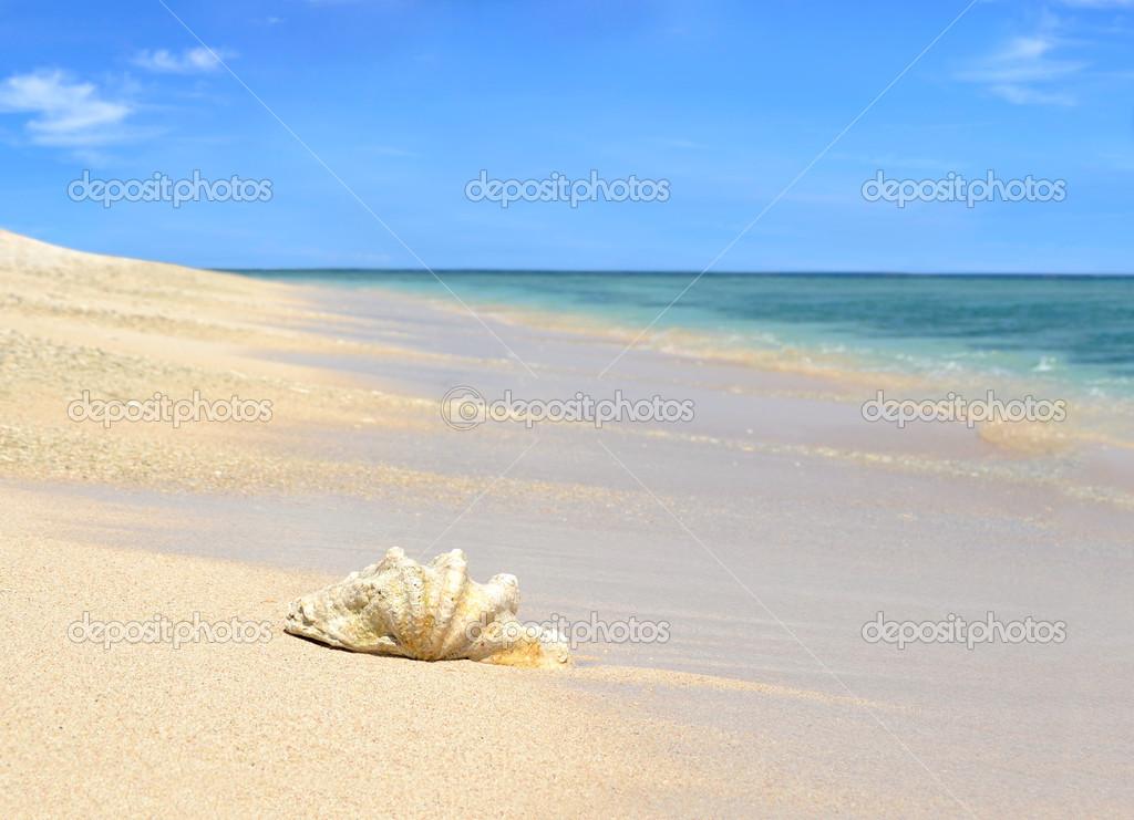 Conchiglia di mare sulla spiaggia di sabbia con cielo blu for Immagini sfondo mare