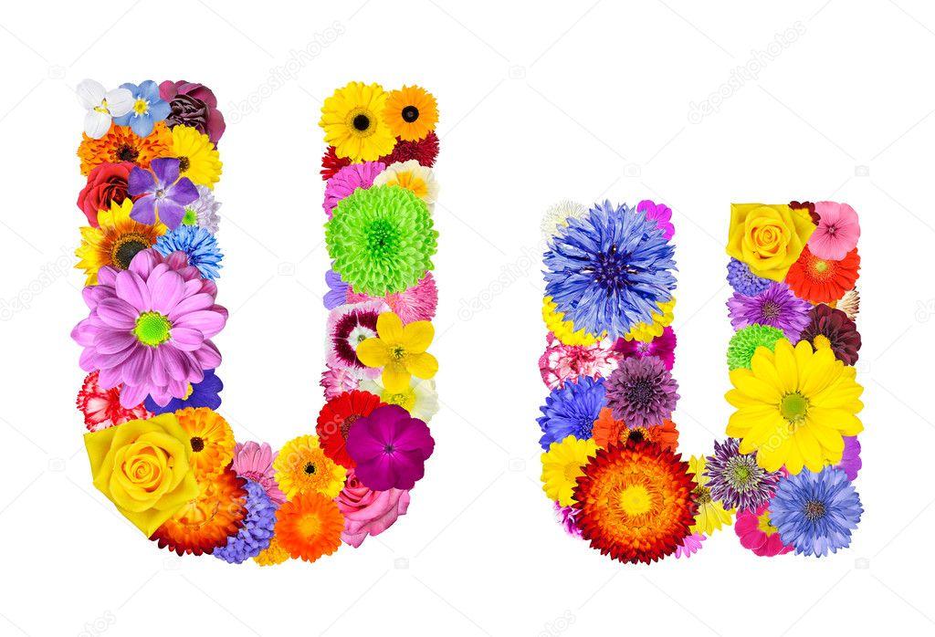 Flower Alphabet Isolated on White - Letter U
