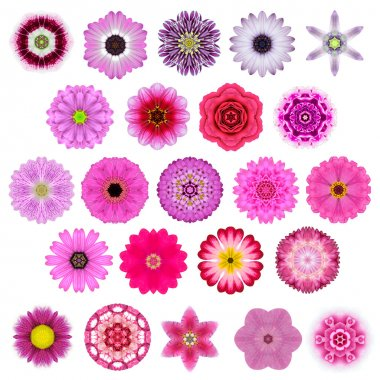 Big Selection of Various Concentric Mandala Flowers Isolated on White
