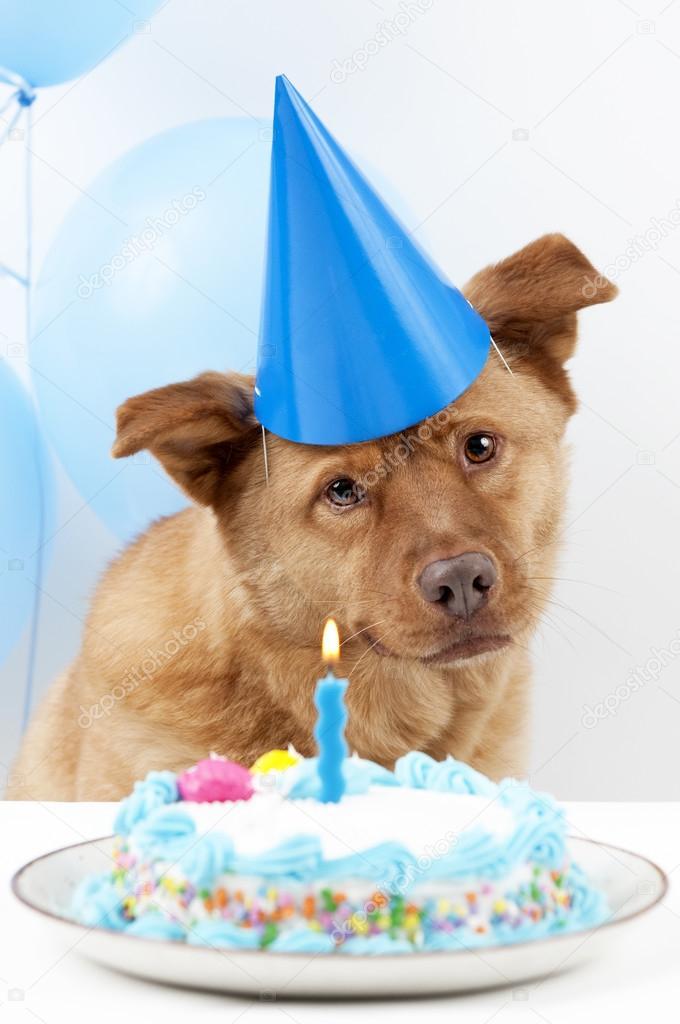 Compleanno Del Cane Foto Stock C Websubstance 22665869