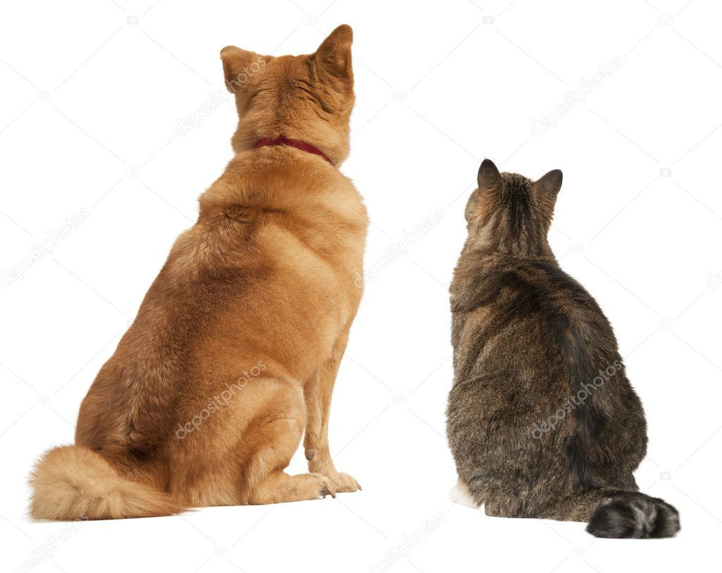Cat Dog Behind Sign Png