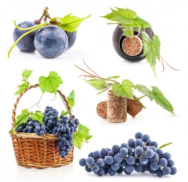 Collection of Dark grapes