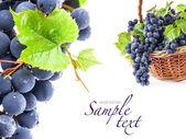 szőlő levelei