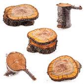 kolekce hrubý řez ovocných stromů
