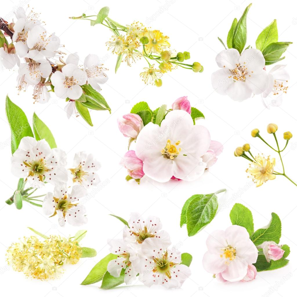 Collection of flowers of fruit trees