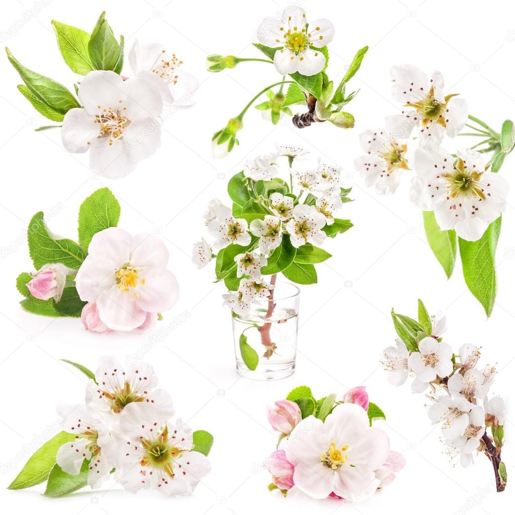 Collection of spring flowers of fruit trees