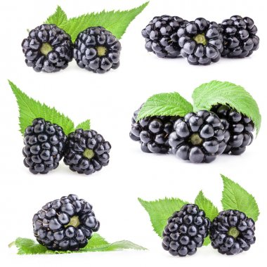 Collections of Blackberry with leaves