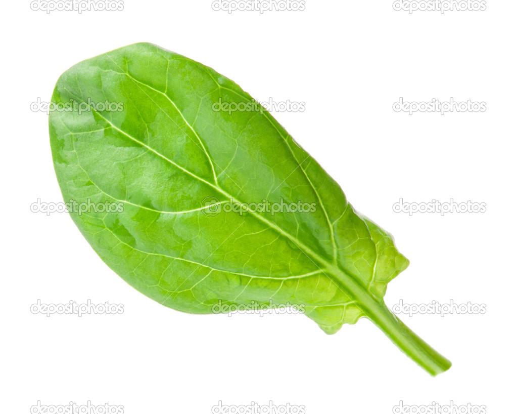 Fotos hojas de espinacas 30