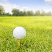 Golf Ball On Tee With Green Grass Field
