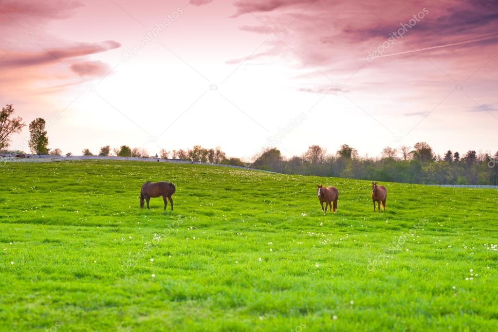 Horses at farmland