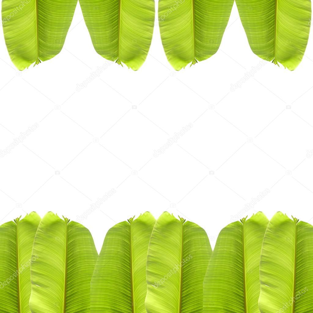 banana leaf on white