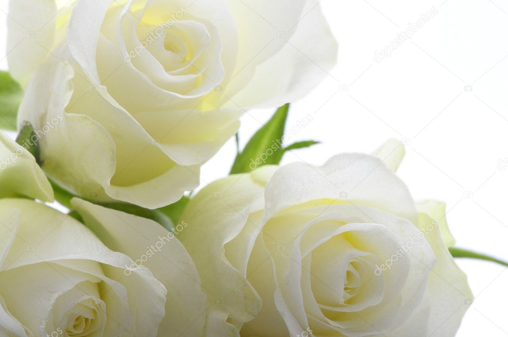 Close up white rose hearts and petals on white background