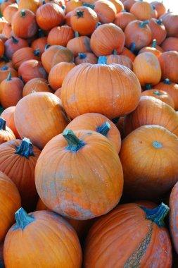 Large pile of pumpkins