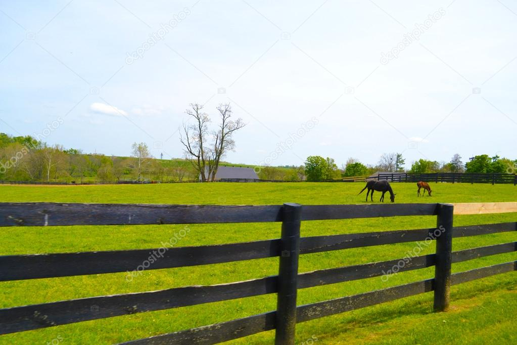 Beautiful Horse Farm in Horse Country in Lexington, Kentucky USA