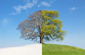 koláž strom zima-léto