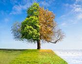 Fotografie vier Jahreszeiten-Konzept
