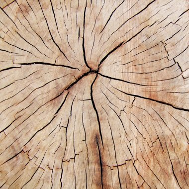 Cross-section of fissured wood