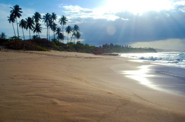Puerto Rico Carribean Sand Beach and Palm Trees next to the Sea
