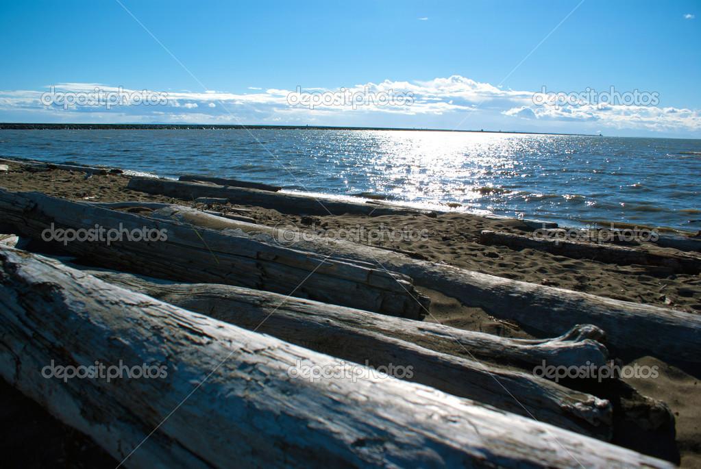 plage de l 39 oc an pacifique du nord ouest au sud de vancouver avec bois flott photographie. Black Bedroom Furniture Sets. Home Design Ideas
