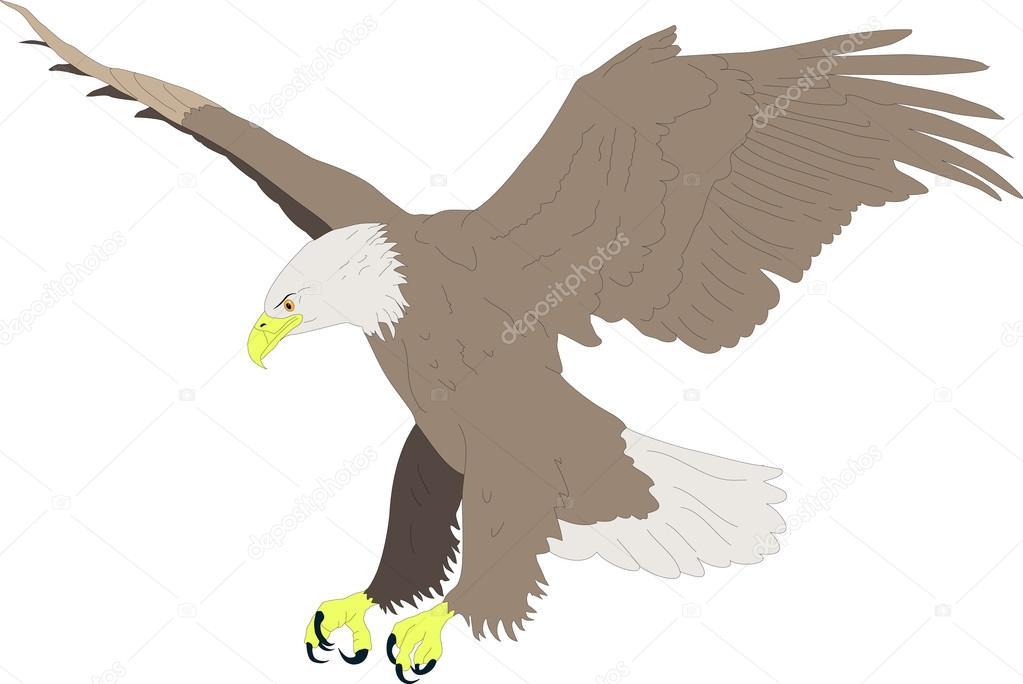 águila calva — Vector de stock © croreja #22268245