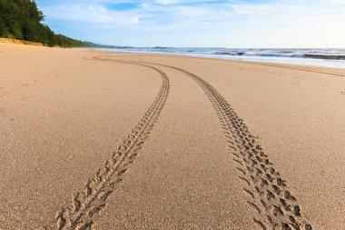 Tracks on the golden sand