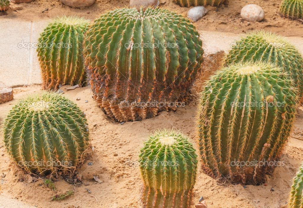 Detail of cactus growing