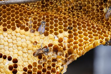 Brown beautiful honeycomb background