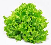 čerstvý zelený salát, samostatný