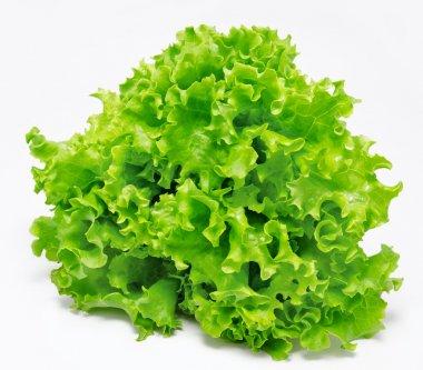 Fresh green lettuce isolated