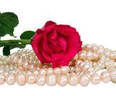červená růže a pearl