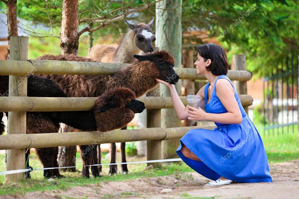 Young attractive woman feeding a group of lama
