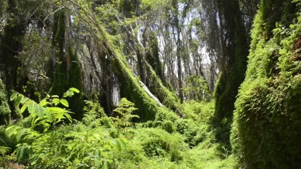 alberi della giungla