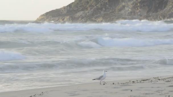 sirály a strandon